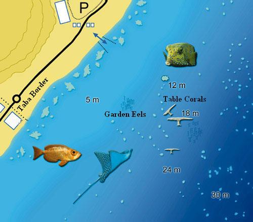 Eilat Isrotel Manta Diving Center Scuba Diving Red Sea Eilat